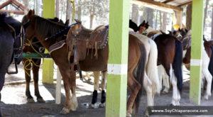 paseo a caballo en grutas de rancho nuevo