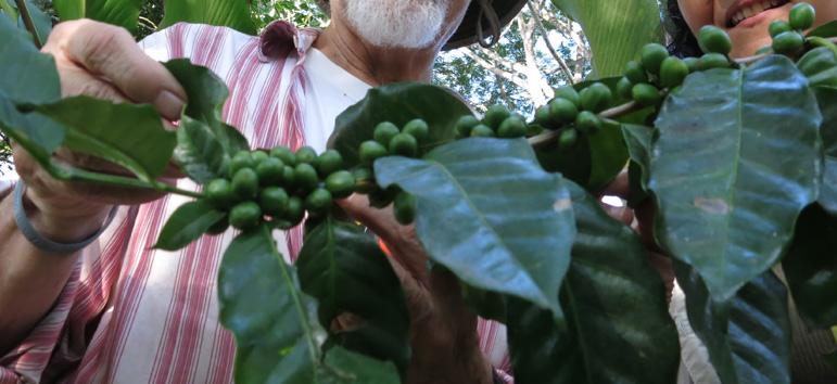 Finca Irlanda en Chiapas - Ruta del Café