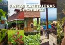 Fincas Cafetaleras de Chiapas
